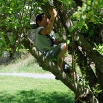 boy climbing apple tree
