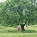 Kids climb an apple tree