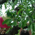 Kids in an apple tree