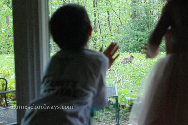 Kids watching a hare in our backyard