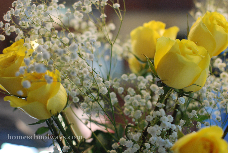 Yellow roses, baby breath