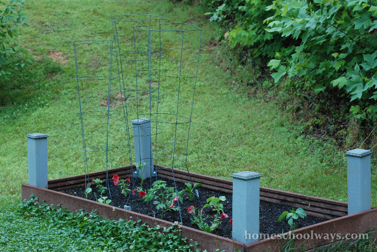 Vegetable garden in a small enclosed area