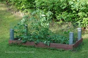 Veggie Garden - Summer