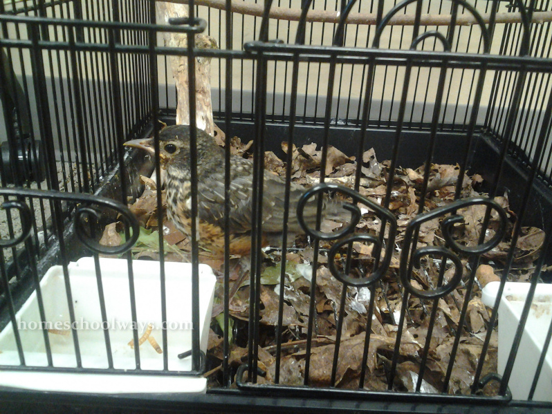 Little bird in a cage - my kids observed it and played with it for an hour
