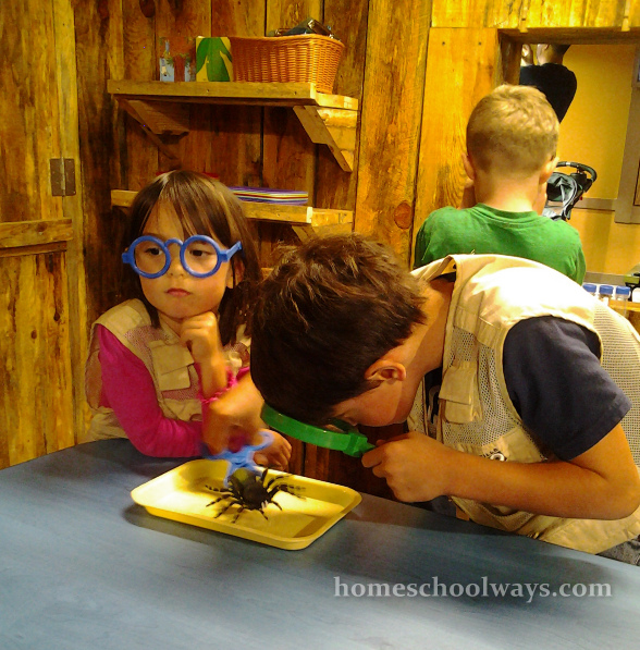 Boy and girl studying insects at the Zoo