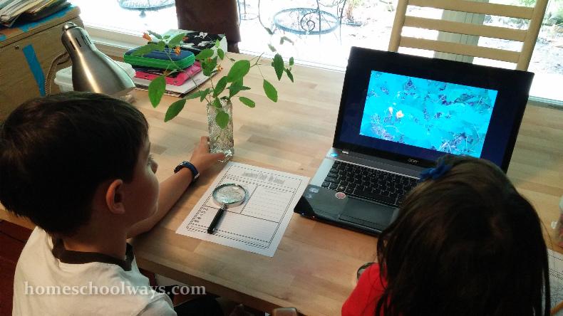 Boy and girl studying jewelweed