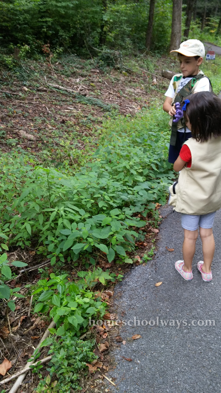 Boy and girl looking at jewelweed plants