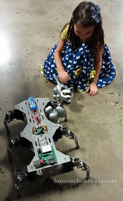 Girl plays with a robot kitty