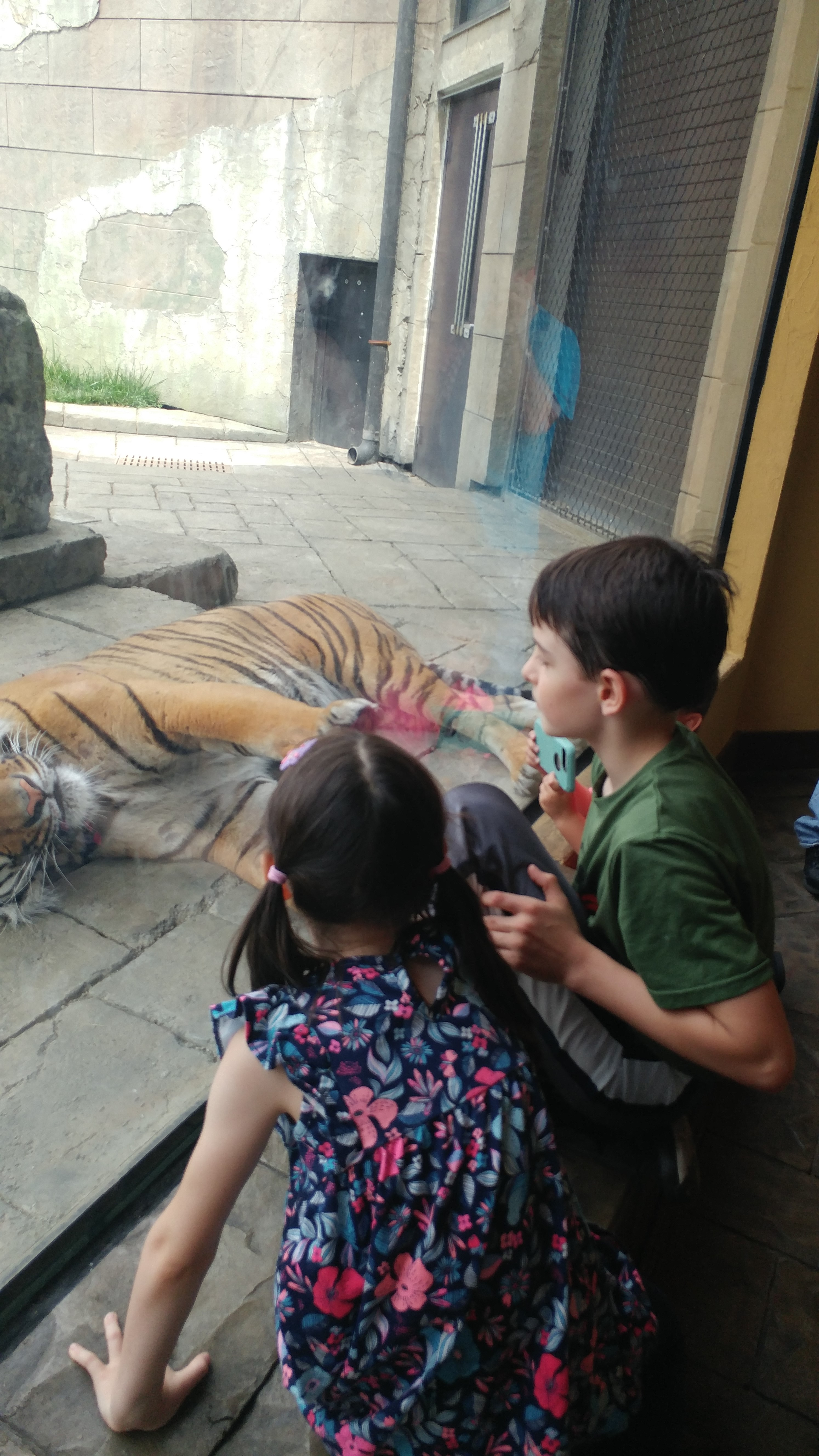 Boy and girl look at a tiger in the zoo